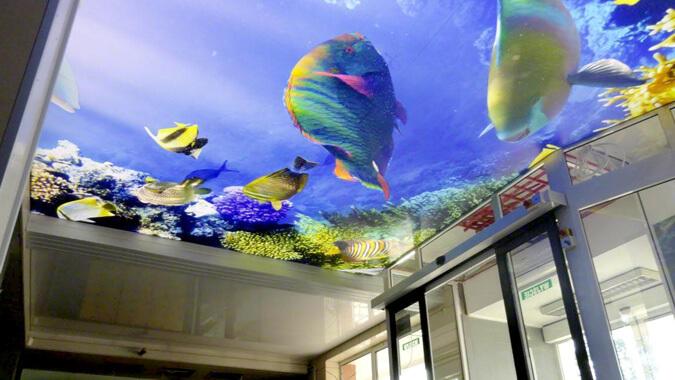 3д натяжной потолок - аквариум