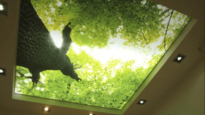 """""""Утро в лесу"""" - светопрозрачный потолок с фото печатью"""