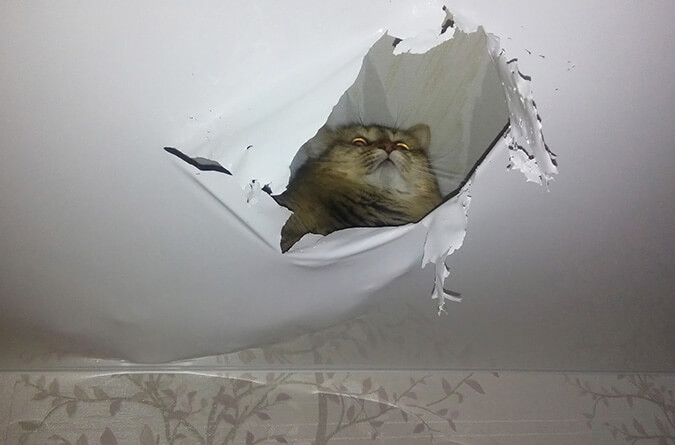 Кот порвал потолок