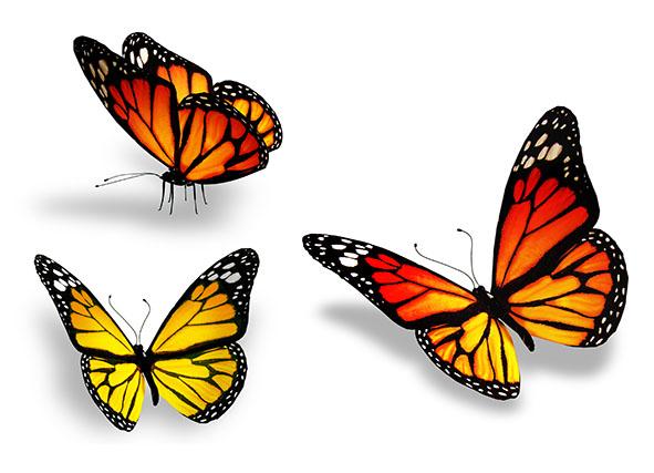 Бабочки 112714666