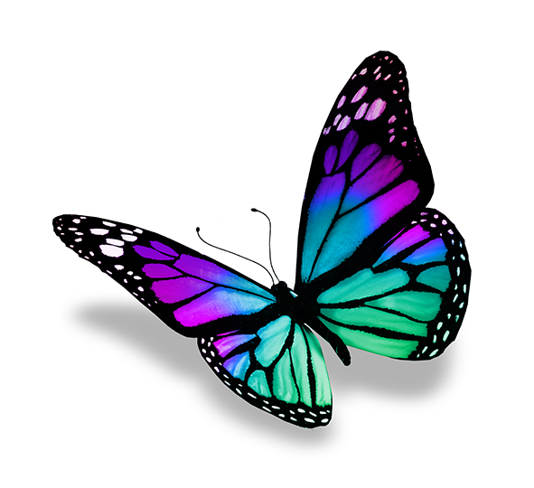 Бабочки 114428965