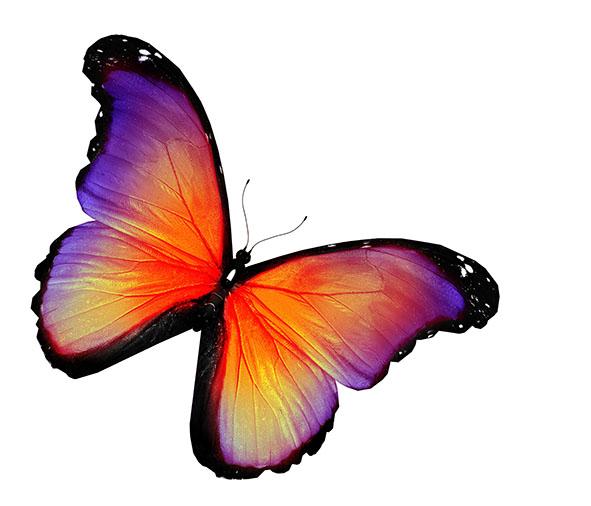 Бабочки 117513880