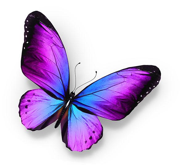 Бабочки 118568677