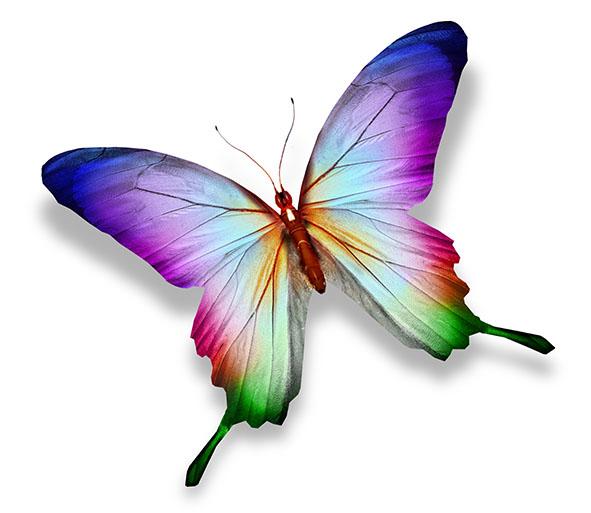 Бабочки 121982695