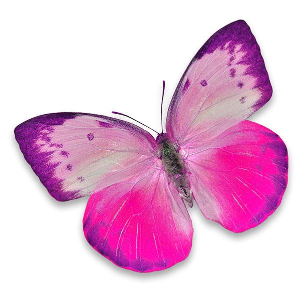 Бабочки 123872272