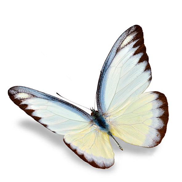 Бабочки 126490073