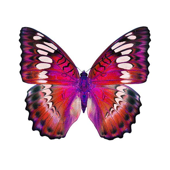 Бабочки 135605438