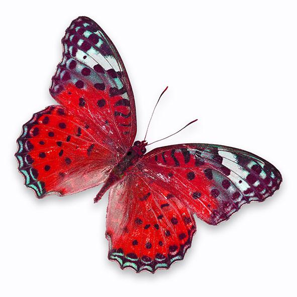 Бабочки 143077375
