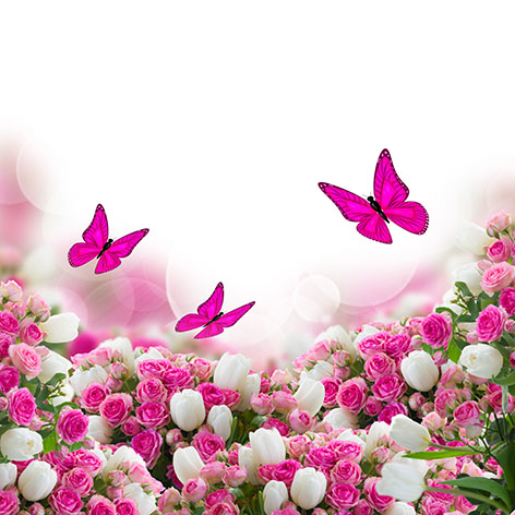 Бабочки 207450025