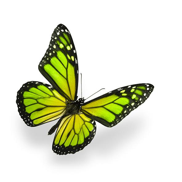 Бабочки 45434098