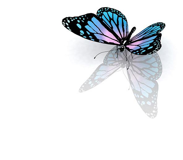 Бабочки 63543310
