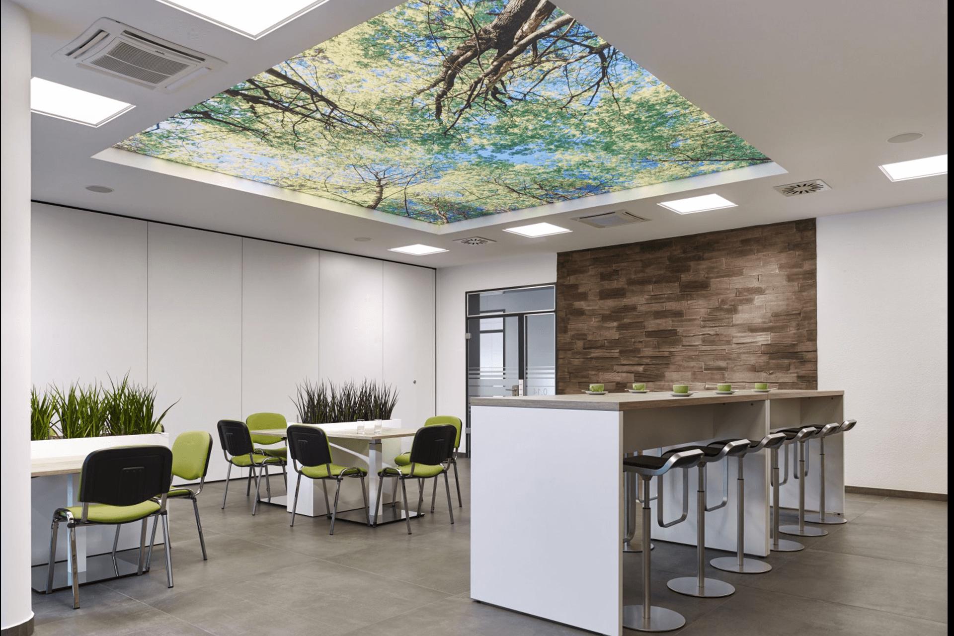 Натяжные потолки с фотопечатью в офисе - лес