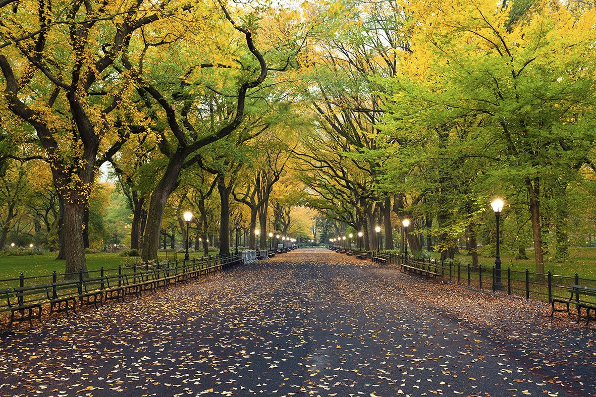 Деревья 116584246