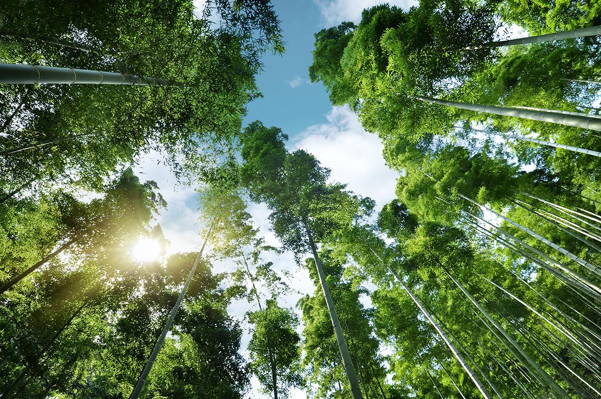 Деревья 118575922