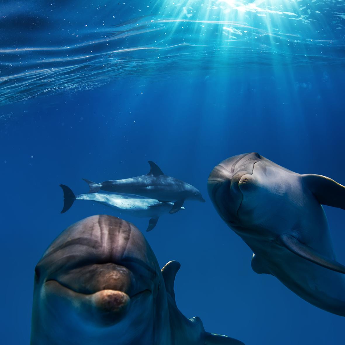 Дельфины 120731392