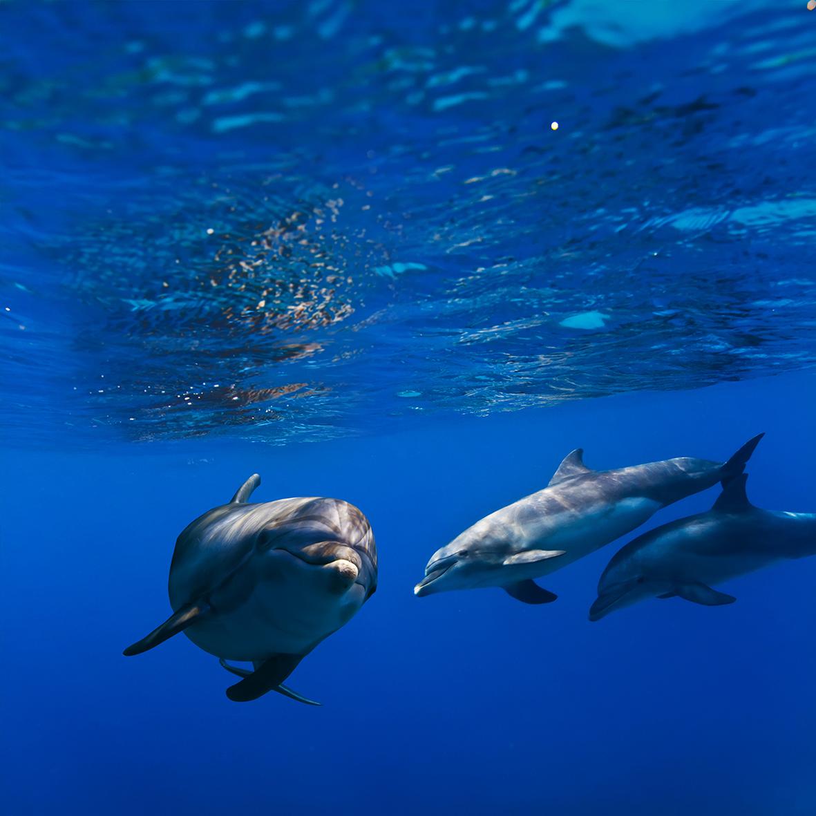 Дельфины 123183883