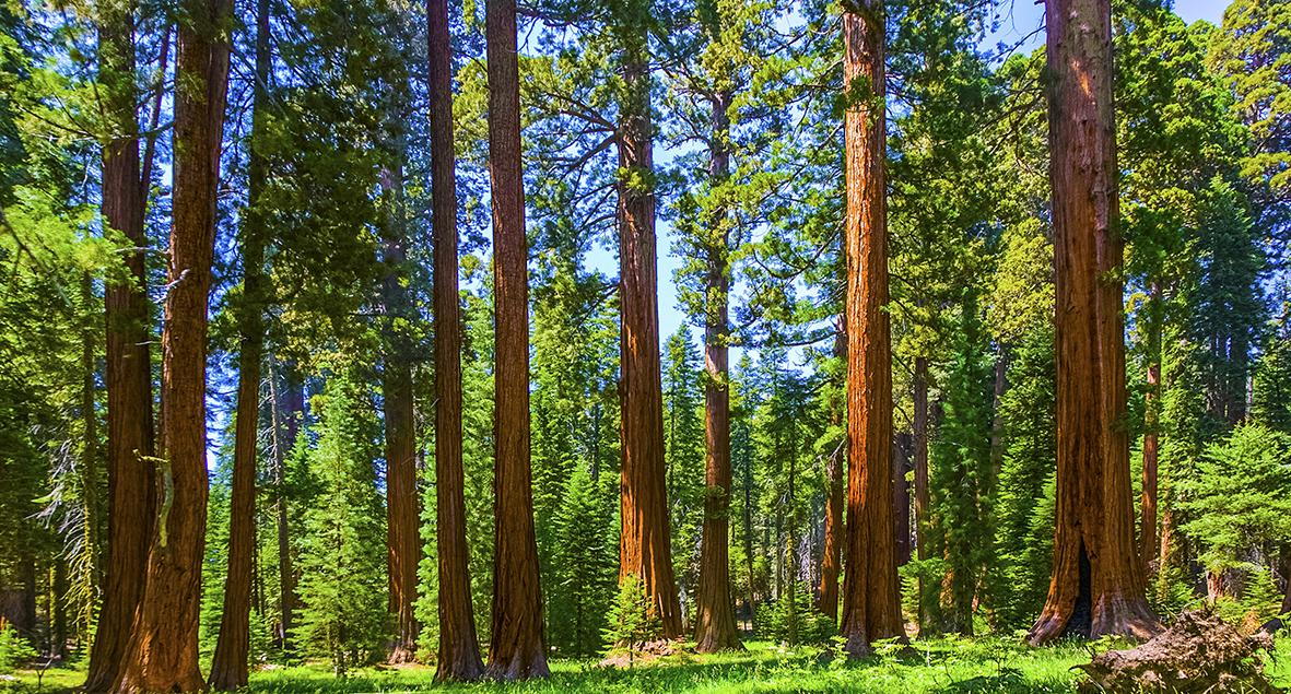 Деревья 126273920