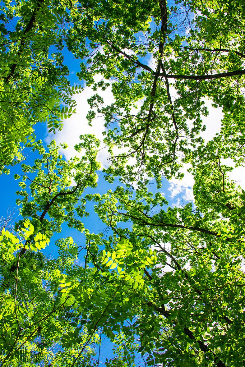Деревья 138359651