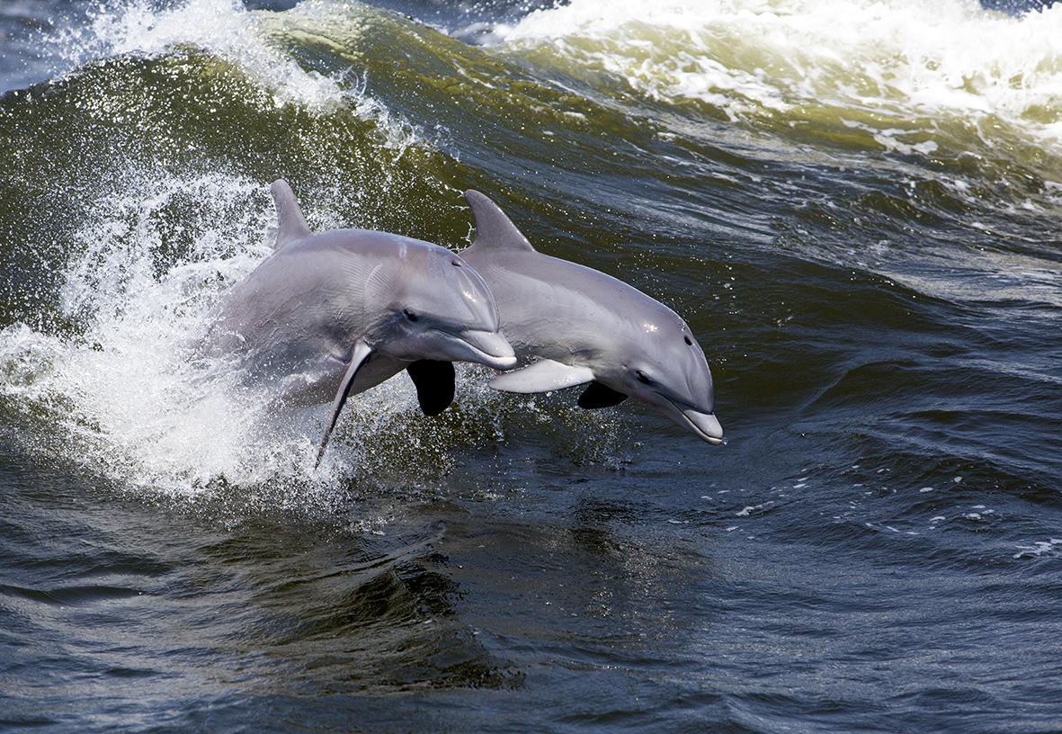 Дельфины 144774718