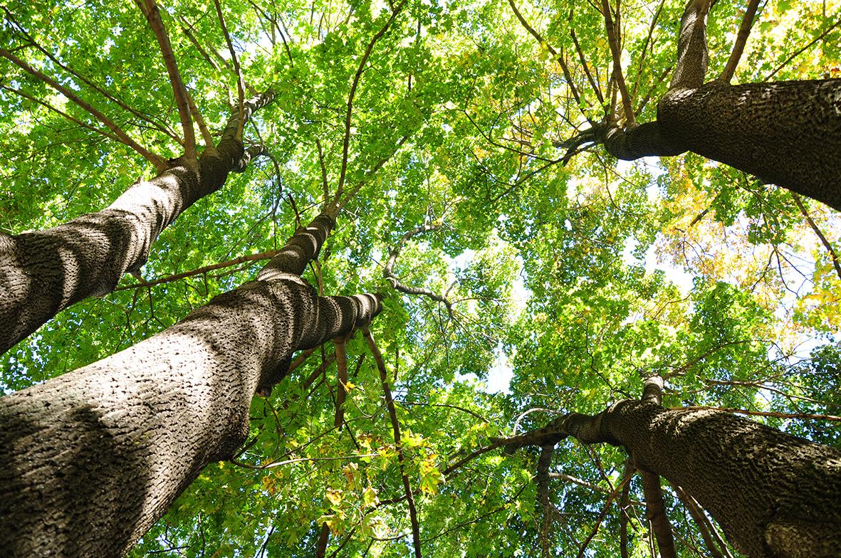 Деревья 158094683