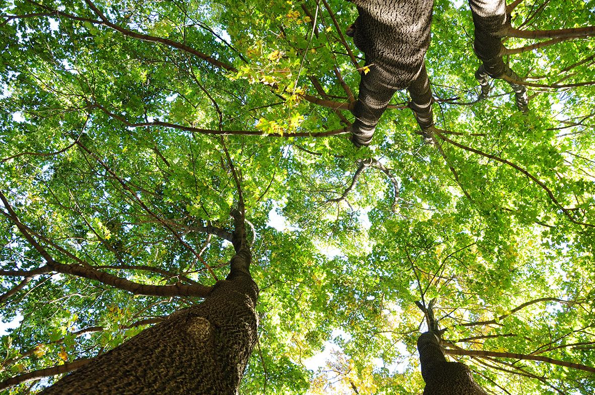 Деревья 158094689