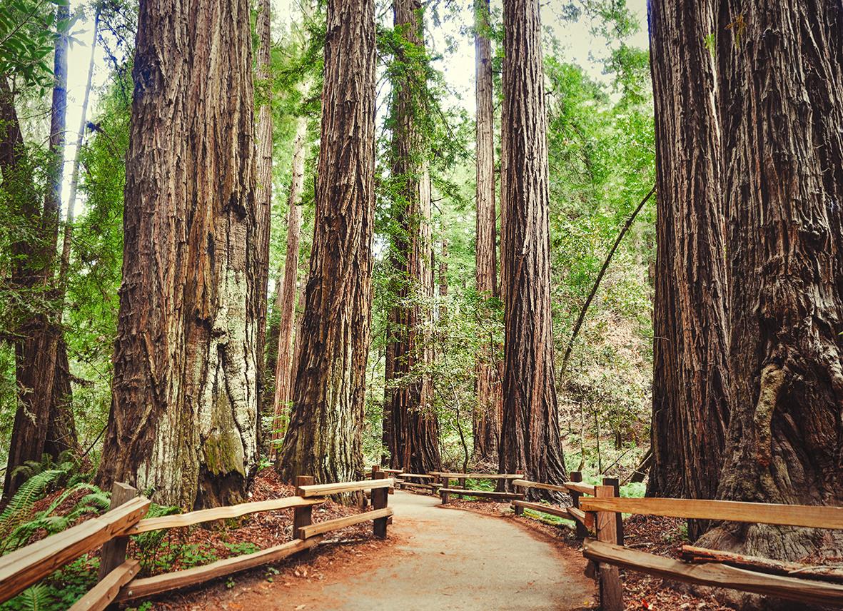 Деревья 390881134