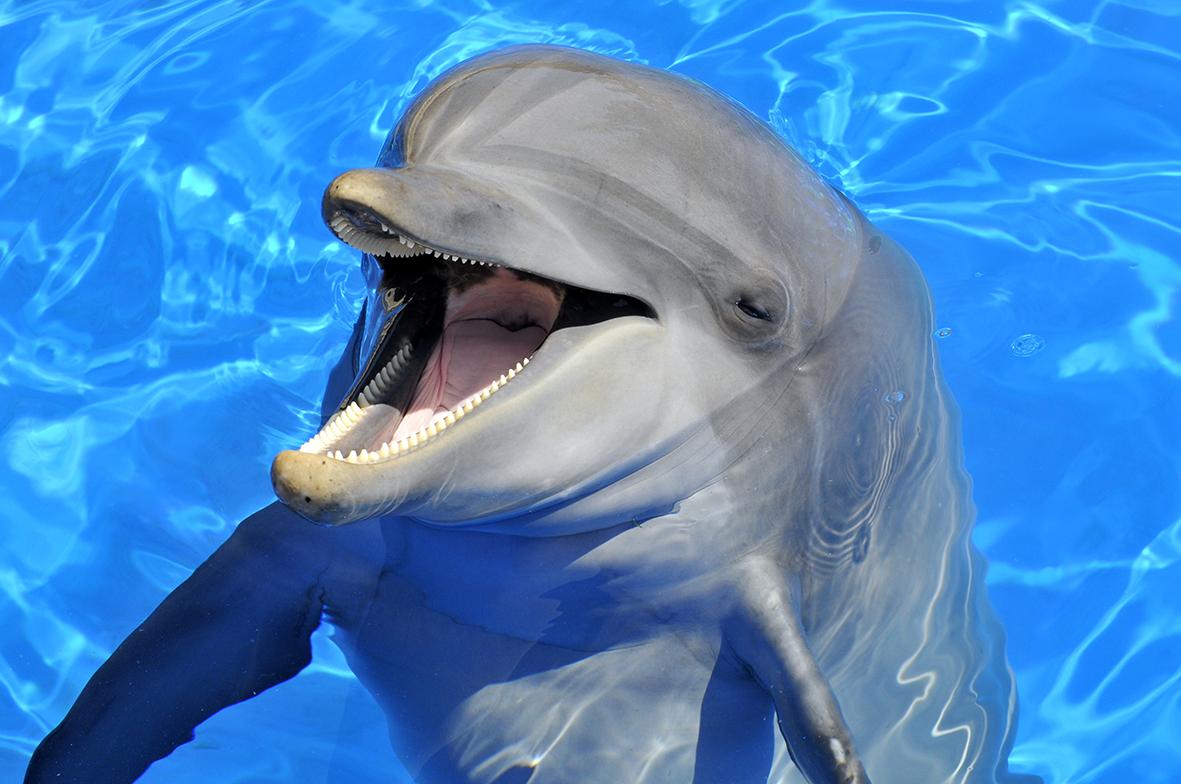Дельфины 41107657