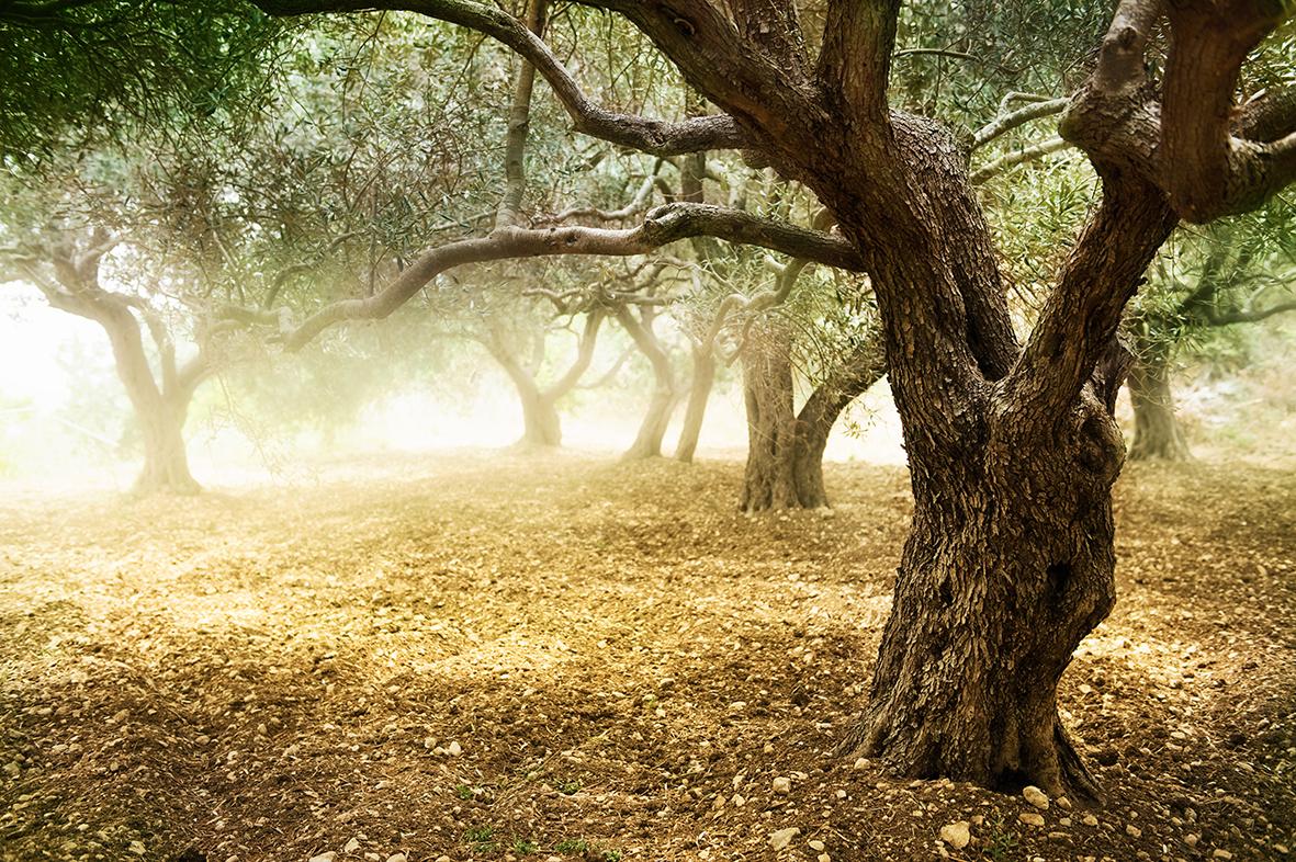 Деревья 54850750