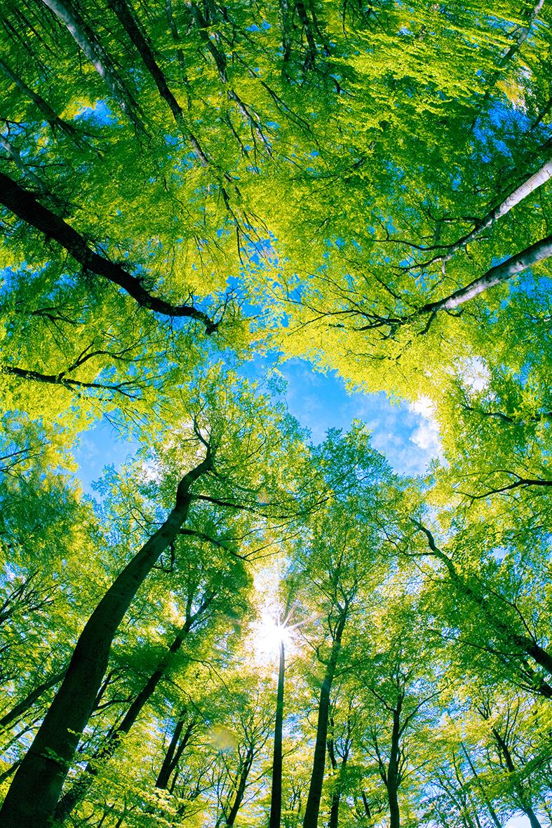 Деревья 55023121
