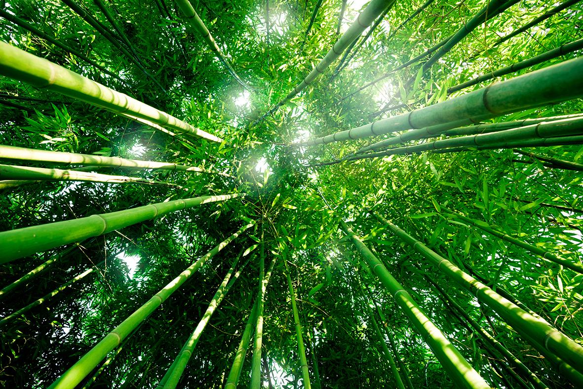Деревья 67489906