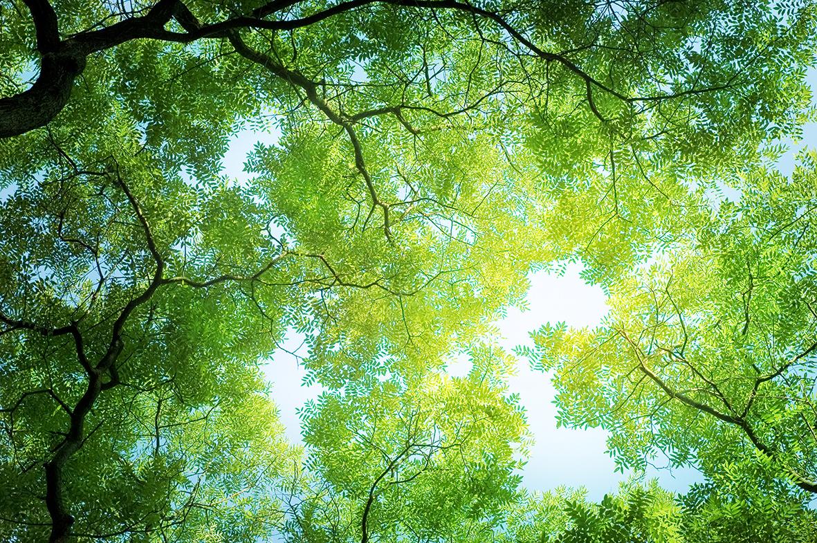 Деревья 68234935