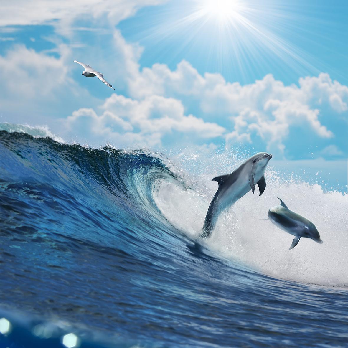 Дельфины 70805110
