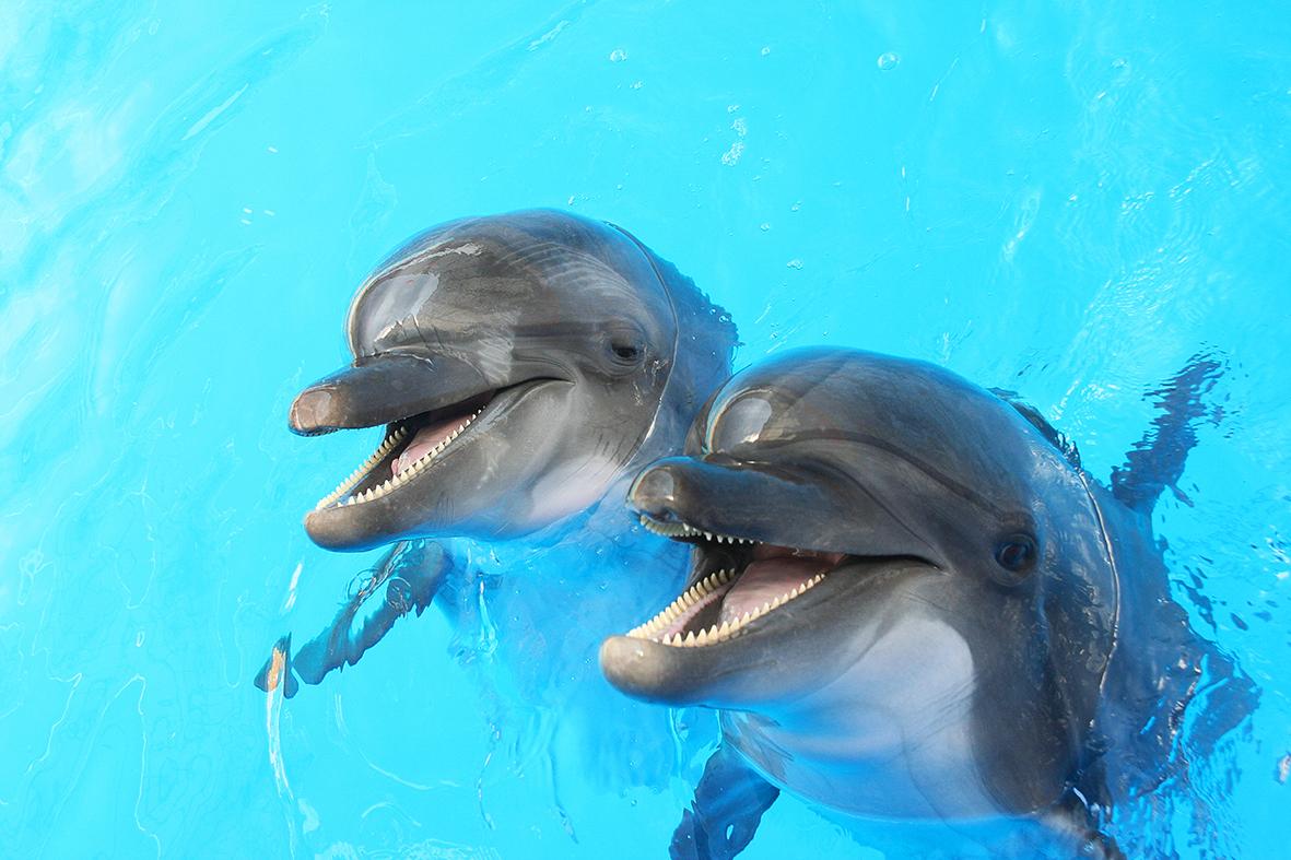 Дельфины 79521799