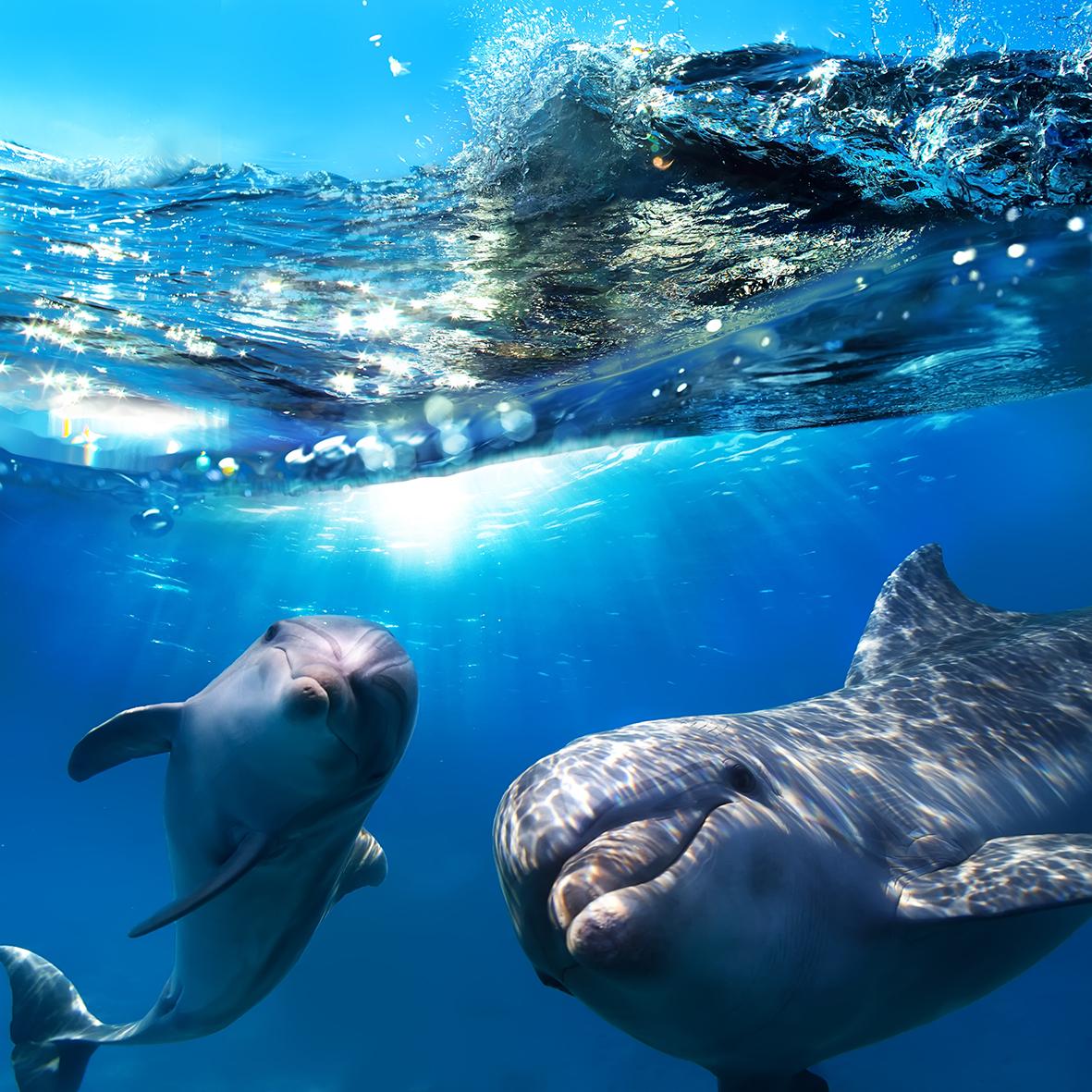 Дельфины 89433142