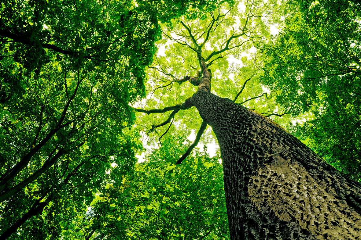 Деревья 95030080